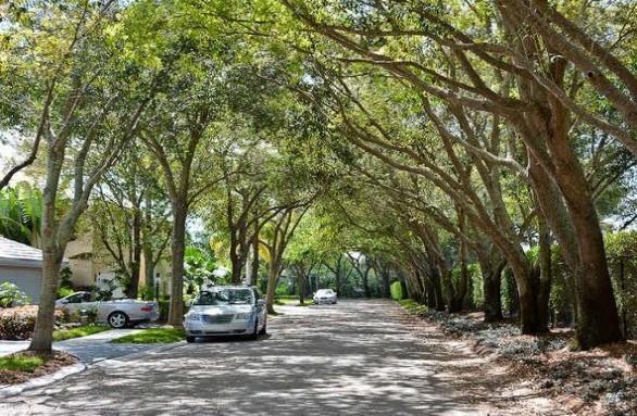 Cypress Island #8